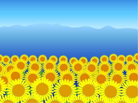 Summer view sunflower · Alps · blue sky