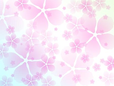 Sakura water color background