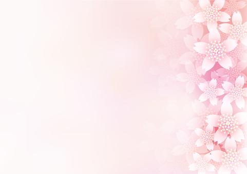 Cherry Blossoms 14