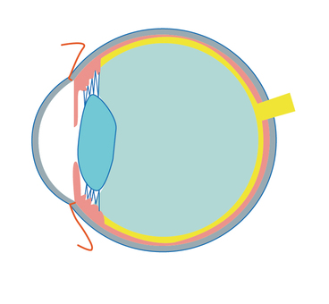 Eye cross-section map
