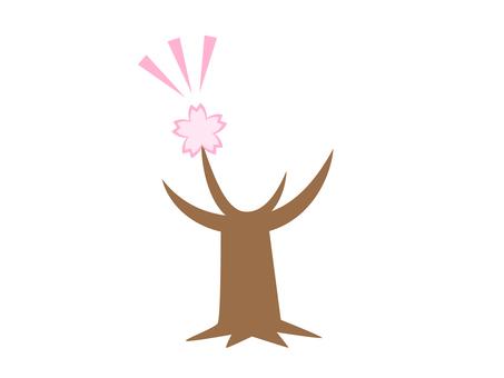 Cherry tree (flowering)