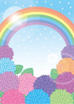 Rain, rainbow and hydrangeas