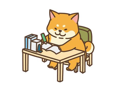 Home study Shiba