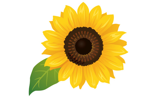 Summer flower · Sunflower (sunflower) Icon 01
