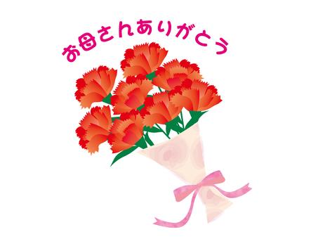 꽃다발 카네이션 감사