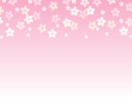 Cherry blossom background _ Horizontal (pink