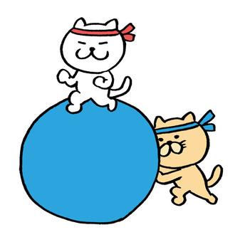 Cat athletic meet
