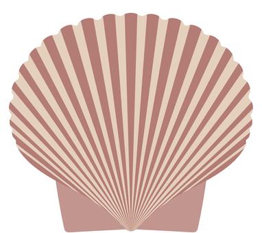 Scallop shellfish Shell shell