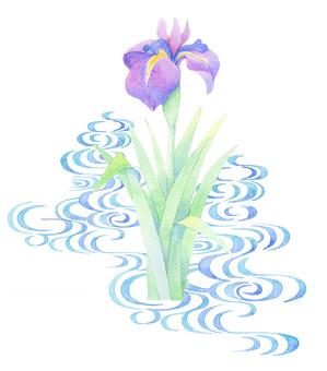 Iris and water ★ 0315-F