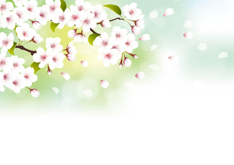 Cherry blossom - white background on green background