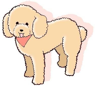 Dog series ③ Poodle