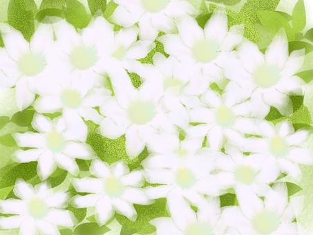 클레 마티스 흰색