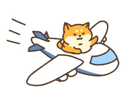 비행기 시바