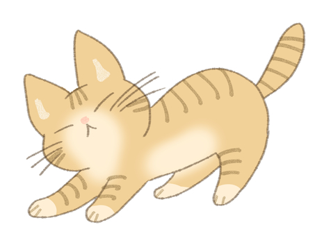 Tea tiger cat growth