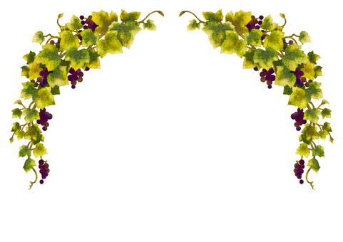 Grape illustration frame 03-2 (no line)