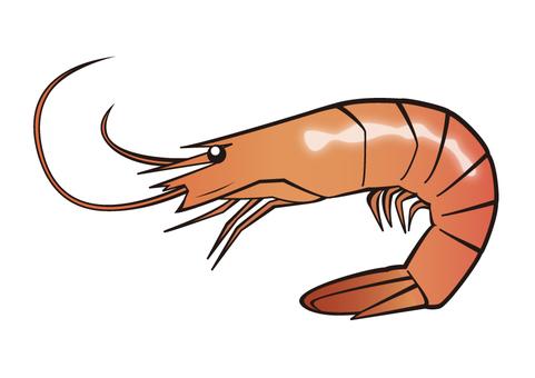 Fish _ shrimp