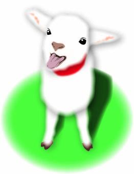 Sheep 04