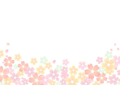 Cherry blossoms 53