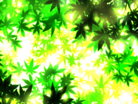햇살 단풍 나무