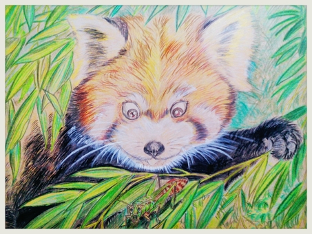 Red panda and grasshopper