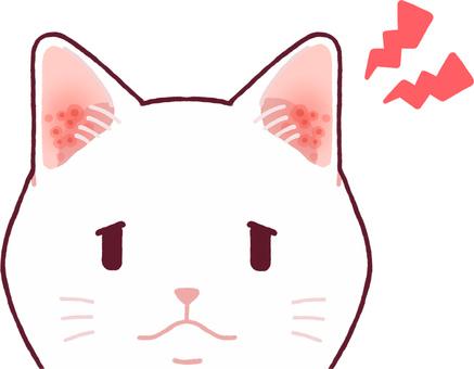 귀가 빨개 져있는 고양이