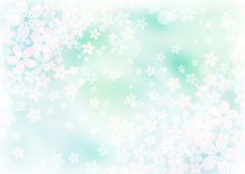 Sakura _ pale green background 1847