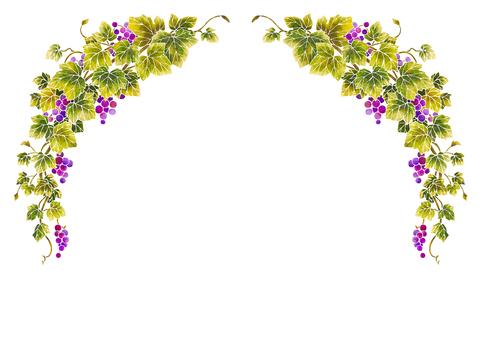 Grape illustration frame 04-1 (white line)