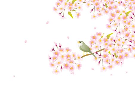 桜の花とうぐいす