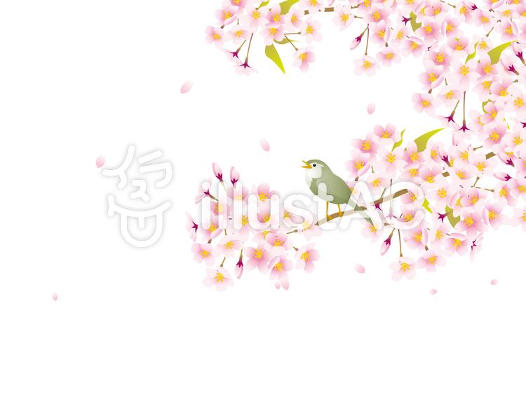 桜の花とうぐいすのイラスト