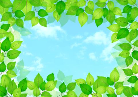 Fresh green material 214