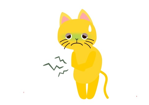 Stomachache cat