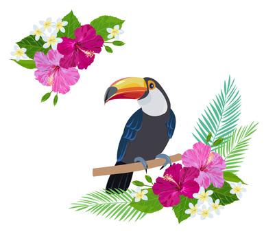Tropical toucan 2