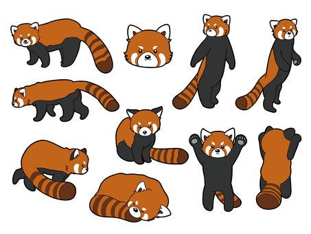 レッサーパンダ10種