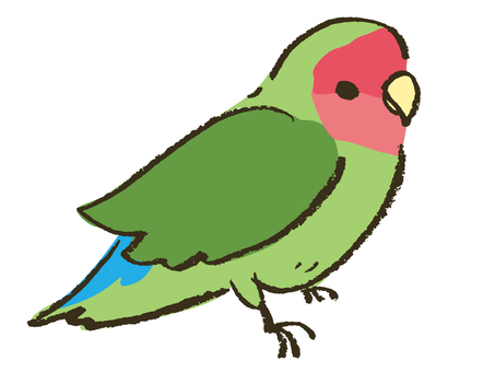 Kozakura鸚鵡(普通)