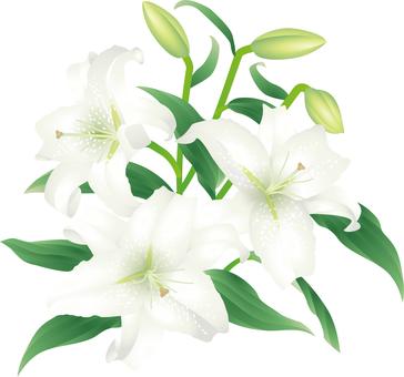 Cut_Oriental Lily 1
