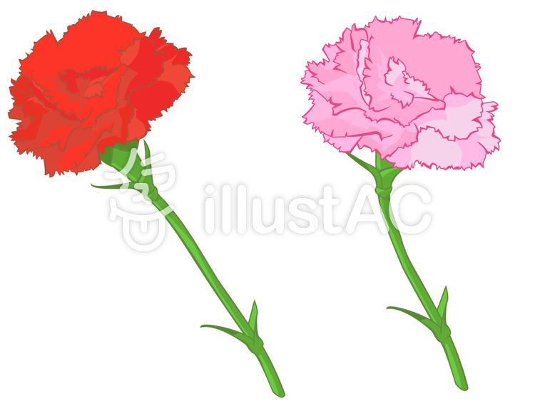 花,カーネーション