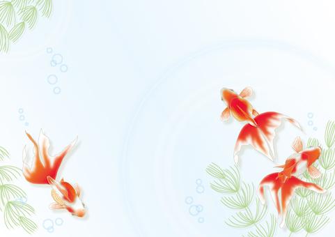 Horizontal goldfish and water grass