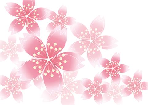 Sakura Sakura 18