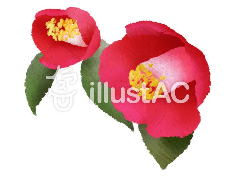 【フリーイラスト素材】お花・椿2