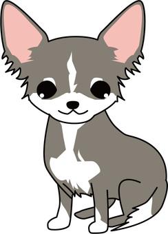 Dog - Chihuahuas 3