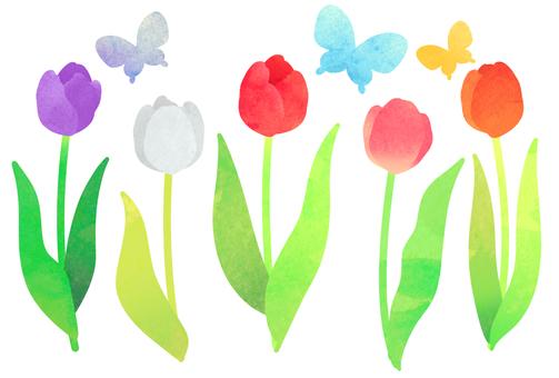 수채화 튤립과 나비 엽서