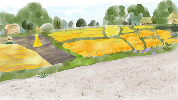 Countryside rice field landscape