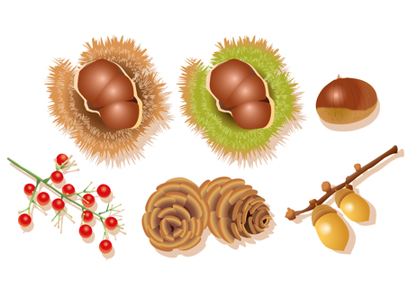 Tree nut 02