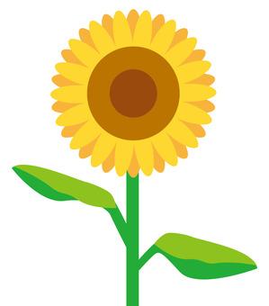 簡單的向日葵