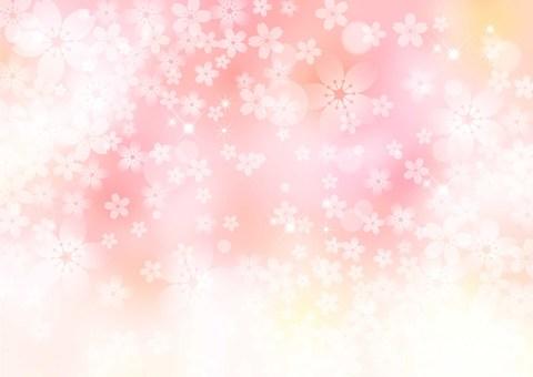 Sakura _ pink _ pale background 1772