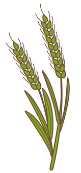 Wheat (green)