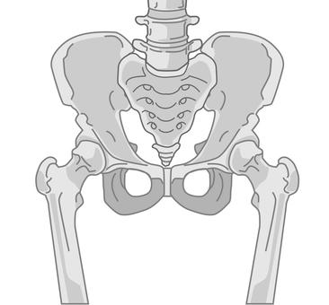 Pelvic bone front