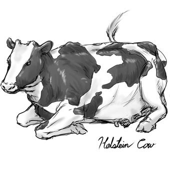 Cow A