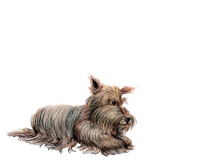 Scotch terrier