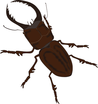 Insects (stag beetle)